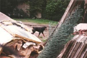sjz sloop-bouw-hondbewaking