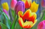 2012-03-24_18-55-42_DSC_6720